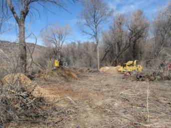 17. In the distance you can see in this photo shows how thick the invasive trees had become and how incredibly difficult it was to clear. There were still a few mature cottonwoods and some New Mexico Olive and Coyote Willow that had managed to survive.